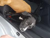 Midnight's story Adoption fee for dogs is $95.00 which