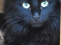 My story Hi, my name is Midnight. I was surrendered by