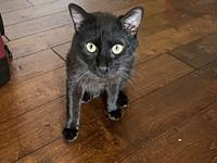 My story MIDNIGHT is a gorgeous boy with a silky black
