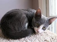Miel's story Description: Miel is a small, gray and