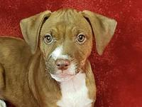 Mighty *FOSTER NEEDED*'s story Meet Mighty, a 9 week