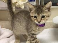 Mika's story Mika is a fun little kitten ready for