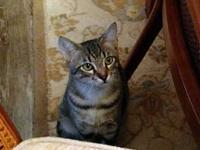 Mika Puls CP's story Mika is a beautiful tabby with a