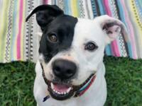 Please visit our website www.austindog.org for full