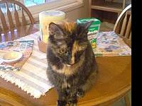 Mikayla's story Mikayla is a 9 year old tortoiseshell