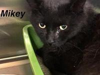 Mikey's story Our pets are spayed/neutered and current