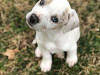 Mila's story My name is Mila! I am 8-10 weeks old. Im a