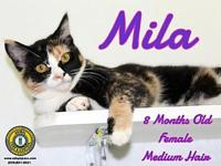 Mila's story You can fill out an adoption application