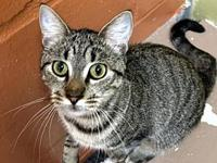 Mila's story Mila knows she is a smart young cat and