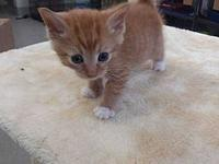 Miles's story Come meet Miles! This adorable kitten