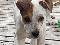 Miley's story Miley is a 9 week old mixed breed! This