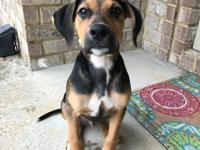 Meet Miller! He is a 6-month-old, mixed breed, bundle