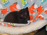 Millicent's story Meet Millicent! She was brought to