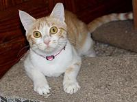 Millie's story My Story Millie is a recent arrival from