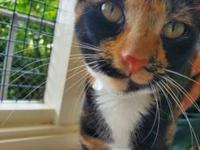 My story I first came to the shelter as a stray kitten,
