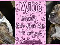 Millie's story You can fill out an adoption application