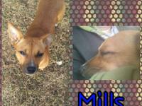 Hey friends! My name is Mills! I am so excited to find