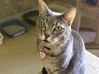 Milly's story Milly is a sweet girl who is friendly,