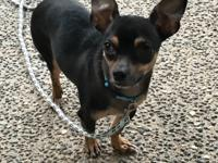 Darling tiny Milly is approx 4yrs old and weighs about