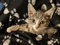 Milo's story Meet Milo (A420416)! His fur is soft like