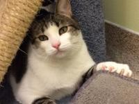 Milo is a handsome gentleman seeking a second chance!