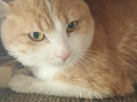 Milo is a very shy cat, and has been struggling to