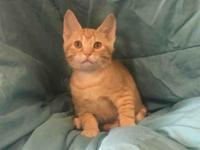 MILO's story Hi! My name is Milo and I am a sweet and