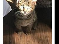 Milo's story Milo is sweet little purr machine. He and