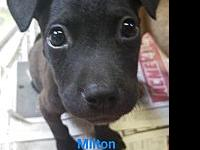 Milton's story Welcome our little island baby,