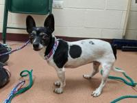 My story Mimi is as cute as a button! This sweet girl