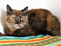 Mimi's story All sugar and no spice! This pretty girl