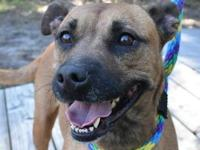 Mimi's story Meet Mimi! Mimi came to HSP from another