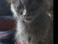 Mimi's story $75 adoption fee includes spay/neuter,