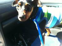 I have a rescued male 4yr old min pin looking for a new