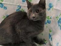 Minda's story 17-C01-002 Minda Breed: Russian Blue Mix