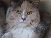 Mindy is a sweet, 8 year old quiet girl who is a little