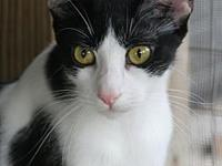 Mindy's story This striking kitty loves to play,