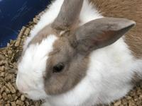 This beautiful girl is bonded to her husbun Mork so the