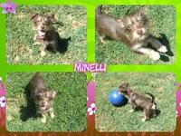 Minelli's story Minelli is a 4 month old Terrier mix.