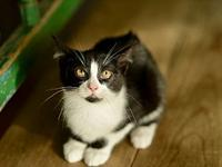 Miney's story Meet the cuddliest kittens you ever did