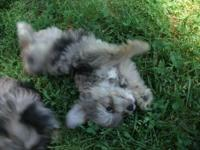 Extremely sweet puppies. Well socialized. Great with