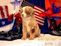 Adorable Mini Australian Shepherd Puppies For Sale