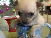 I have ONE male puppy, he is currently 5 weeks old,