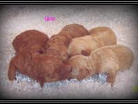 Puppies by Design located in central Arkansas has a