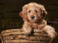 Heartland Goldens and GoldenDoodles is booking our