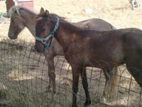 I have a 5 month old colt. We got him when we got his