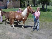 gentle nice mini horses - varies ages/prices, use to