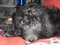 Sassy a black / phantom Mimi female. She has a nice