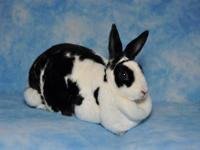 Mini Rex - Minnie - Medium - Young - Female - Rabbit