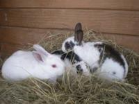We have lots and lots of bunnies that are weaned and